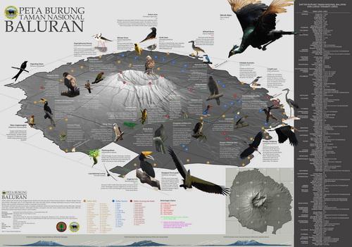 peta burung sedang