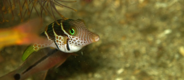 featured images-fish