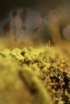 Micro Rain Forest I