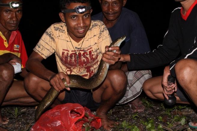 Ikan Morea hasil buruan di Hatuputih.
