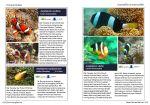 Clownfish yang mudah ditemukan di dalam anemon laut.